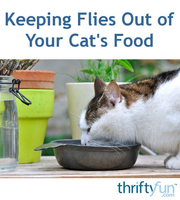 Keeping Flies Out of Your Cat's Food | ThriftyFun
