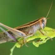 Close-up of a grasshopper on a leaf