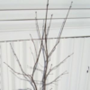 lilac twigs