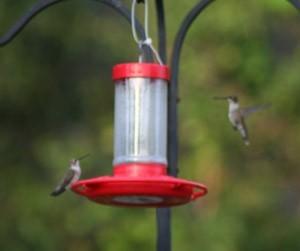 Hummingbirds at hanging feeder