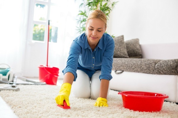 Cleaning Carpet Thriftyfun