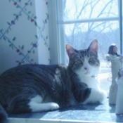 Tucker in window.