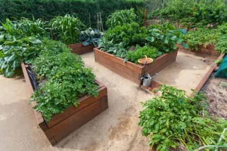 Several raised garden beds full of lush plants