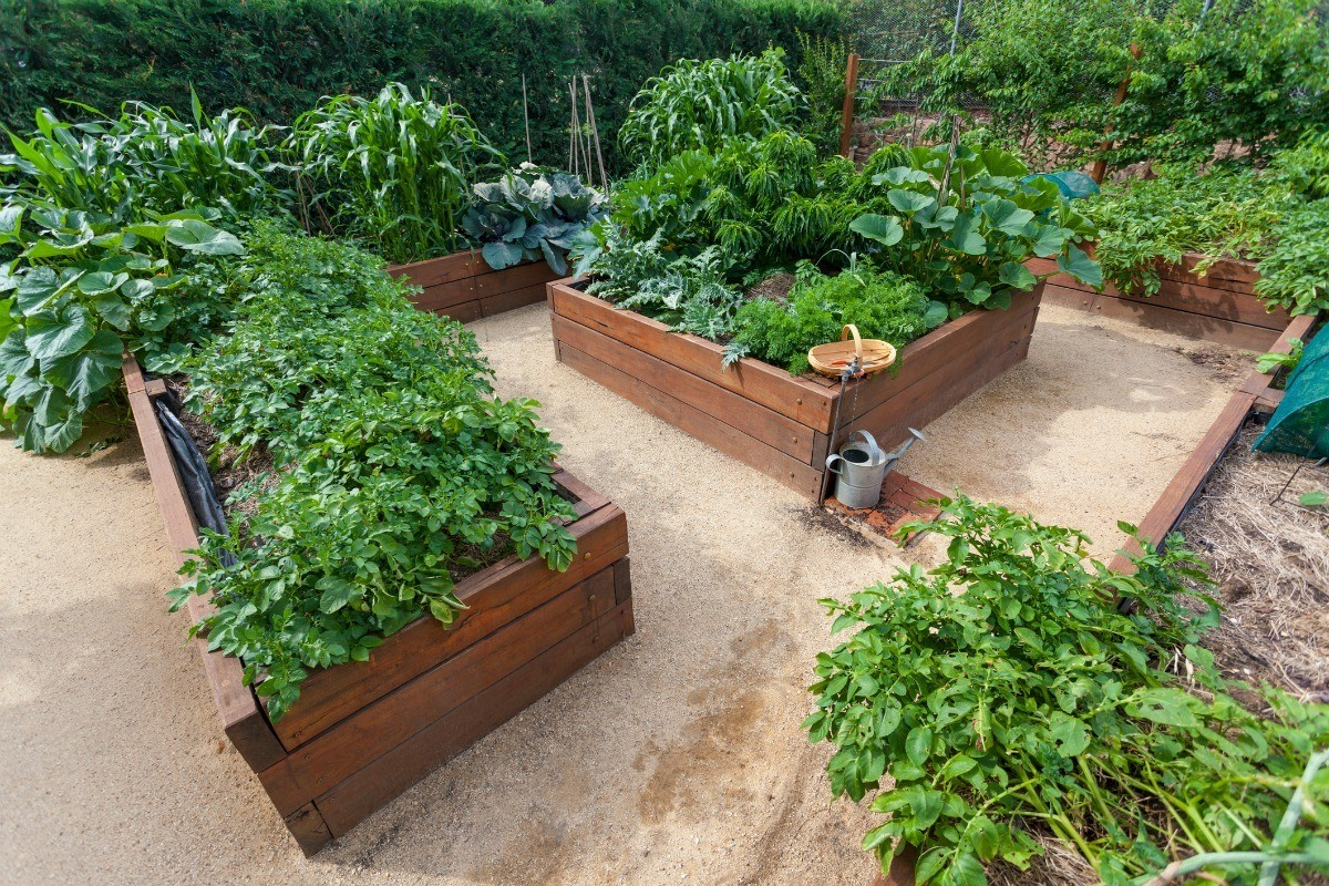 Making A Raised Bed Vegetable Garden