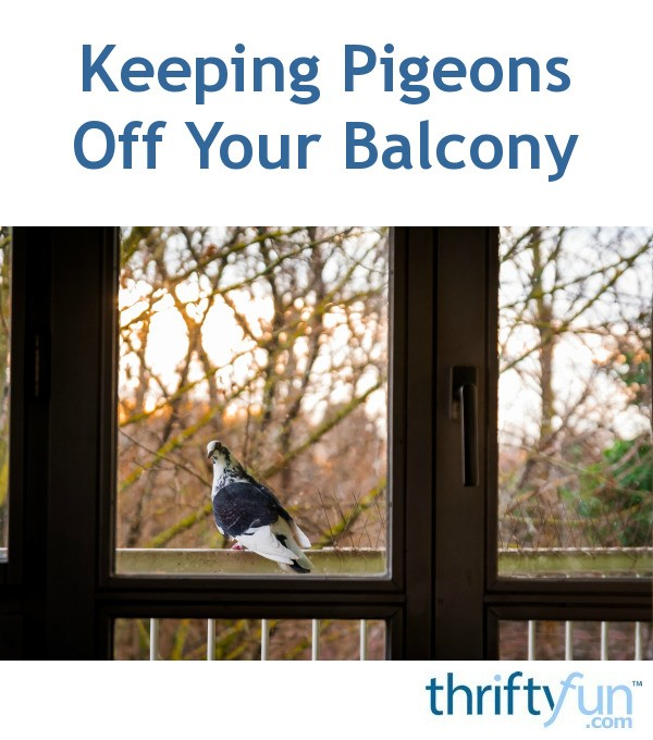 How Do I Keep Birds Off My Deck Railing Best Image Of