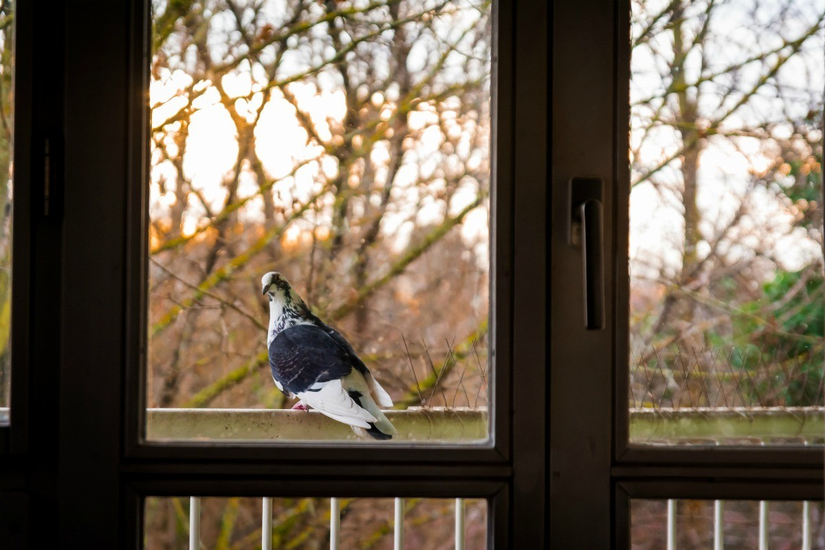 Keeping Pigeons Off Your Balcony