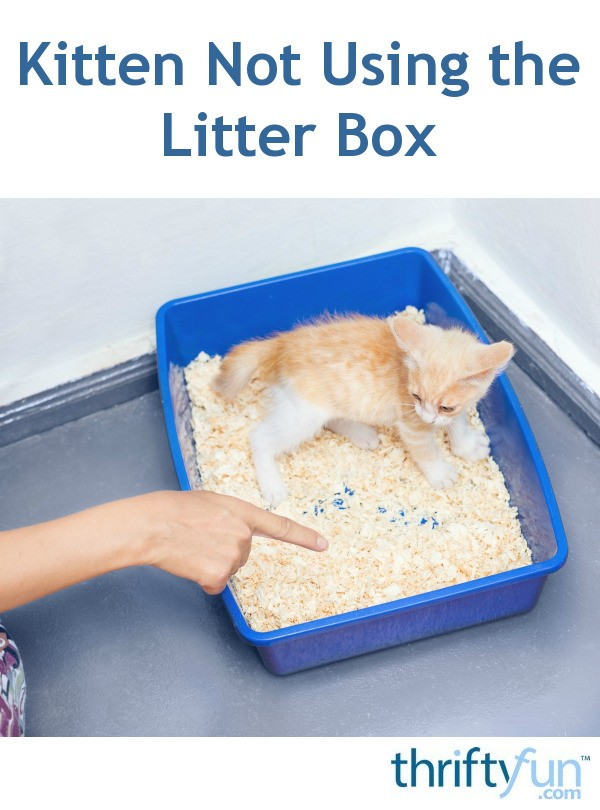 Kitten Not Using The Litter Box Thriftyfun