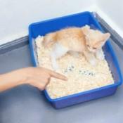 Finger pointing at kitten in litter box