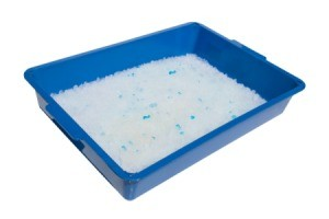 Litterbox on a white background