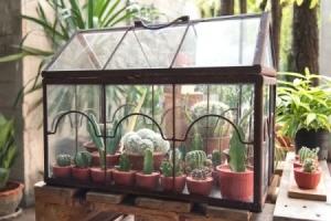 Rectangular Cactus Terrarium