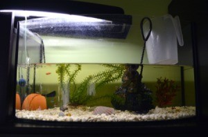 Aquarium in the middle of a water change