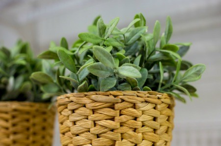 Removing Smoke Odor from Artificial Plants