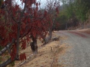 dead looking trees