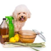 Small white dog seated, surrounded by apple cider vinegar, lemongrass, lemons, etc.