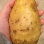 hand holding a potato