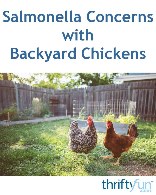 Salmonella Concerns with Backyard Chickens | ThriftyFun