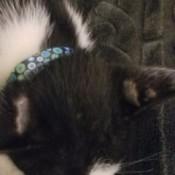 fur missing behind ears