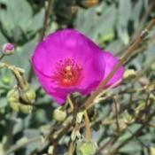 neon dark pink flower