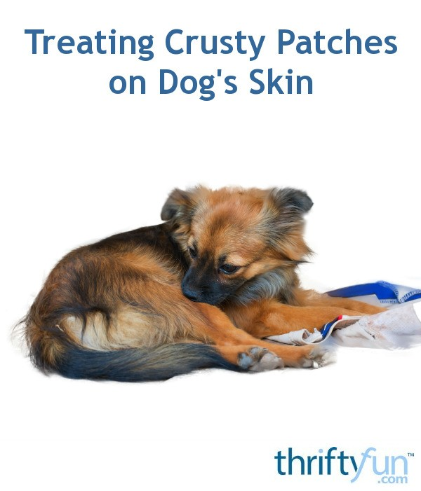 Treating Crusty Patches On Dog S Skin Thriftyfun