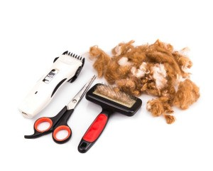 Dog brush, scissors, razor, and dog fur