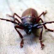 Wildlife: Beetle