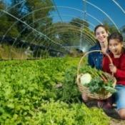 Hispanic woman and child harvesting vegetables.