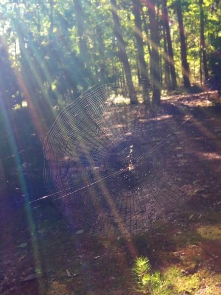 spiderweb with rainbow effect