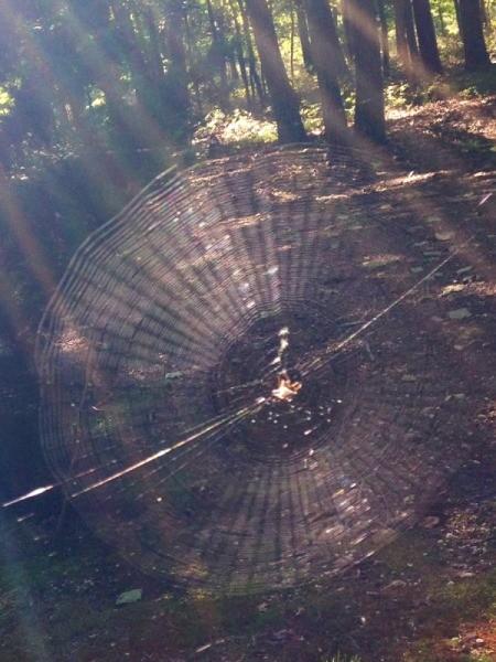 Spiderweb Rainbow