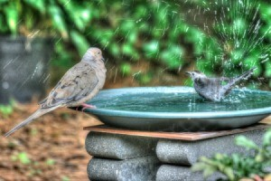 Two birds splashing in a home made bird bath