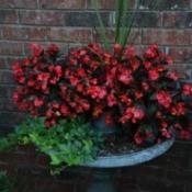 Flowers planted a birth bath basin