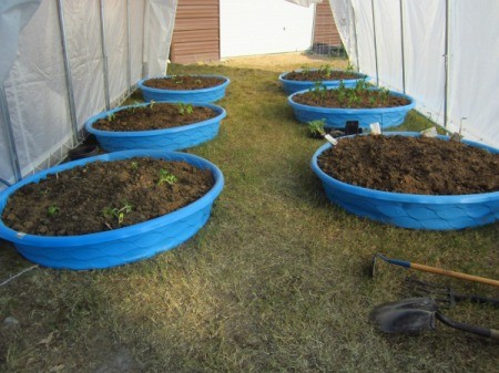 Several kiddie pools being used to grow plants
