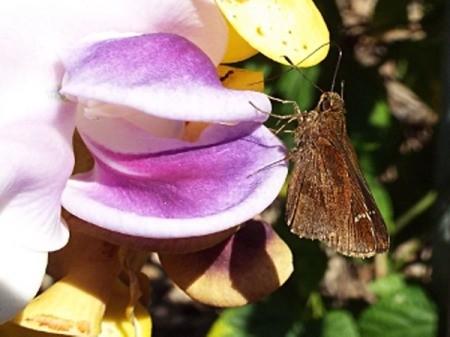 Creature On Caracalla Bloom