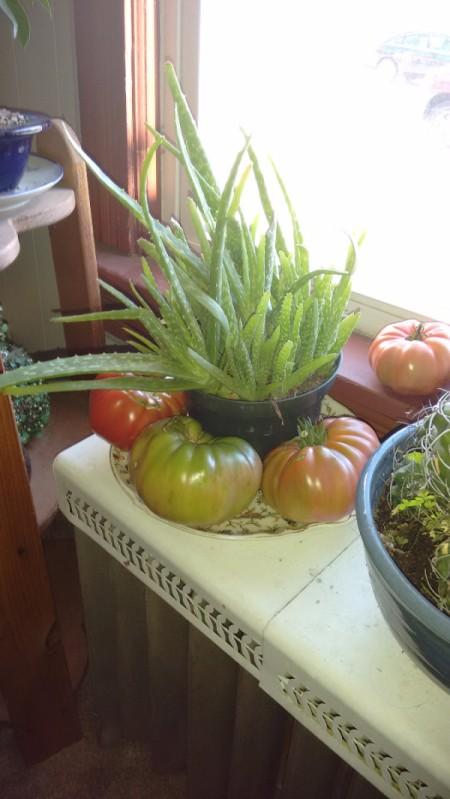tomatoes on dish