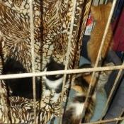 kittens on hammock