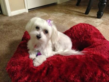 Chloe Mae on red blanket