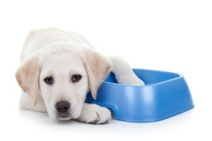 Sad puppy laying next to a plastic dish - one paw in the dish.