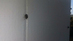 dark colored bug on white wood