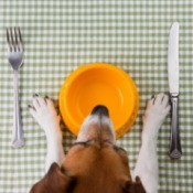 dog at table with plate and flatware