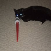 cat with light saber