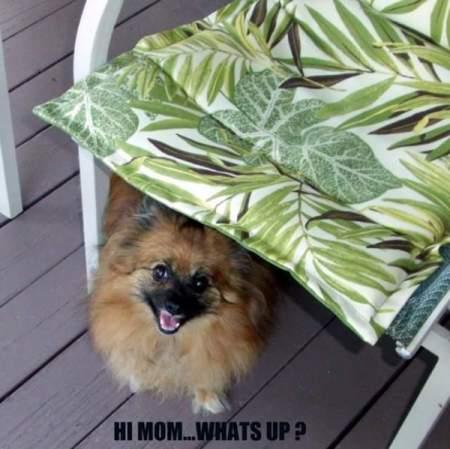 Pom on porch under chair