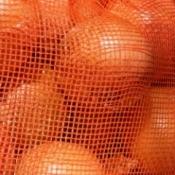 Close-up of oranges in an orange net bag