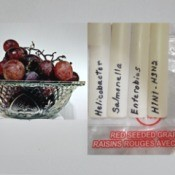 Grapes next to potential diseases.