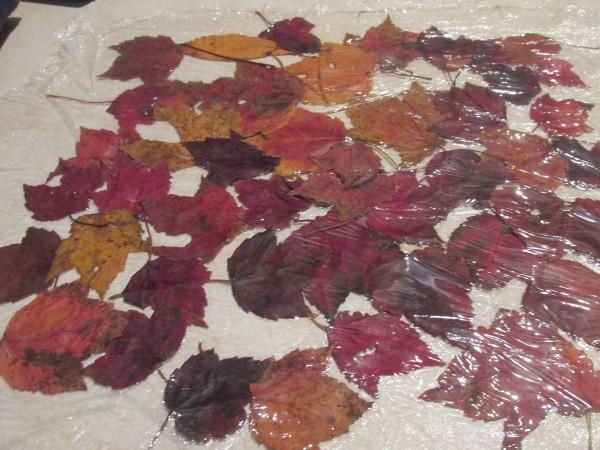 Preserving Fallen Leaves