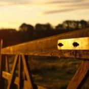 A gate on a homestead, at sunrise.