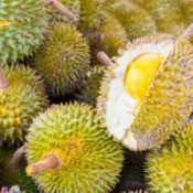 A pile of exotic durian fruits from Southeast Asia