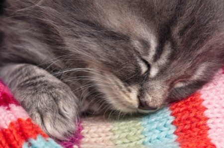 A kitten sleeping on a colorful blanket.