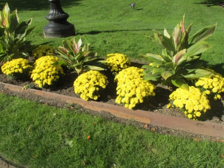 Yellow flowers in a garden bed.