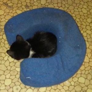 Neck Pillows for Kitten Playtime