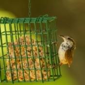 Bird Eating Homemade Bird Food