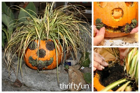Making a Jack-O'-Lantern Planter